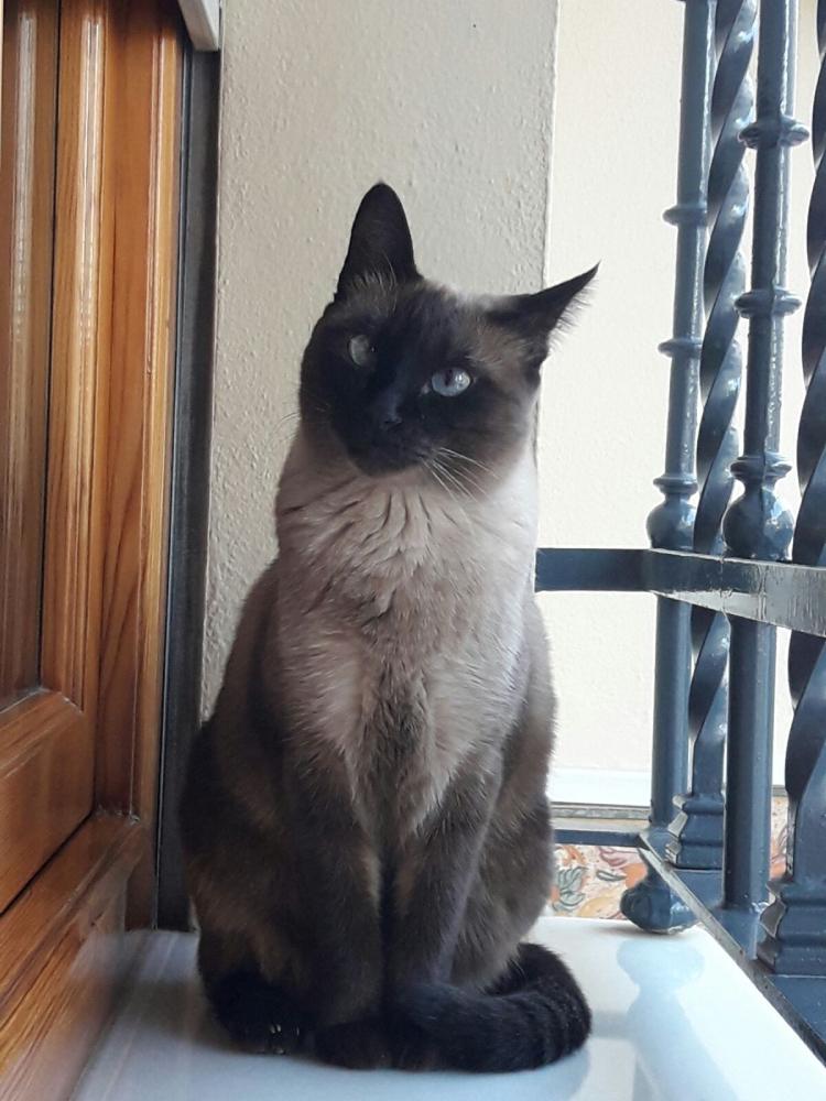 Mina, la otra gata de Alba